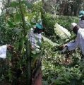 Exiled Yahya Jammeh works on Equatorial Guinea farm 'for the cameras'